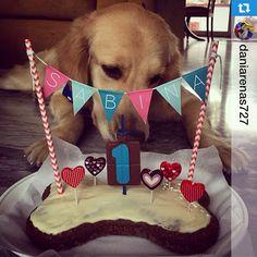 #Repost @daniarenas727・・・Primer cumpleaños de Sabina!  #PerroFeliz #chachayelgalgo #pasteleriacanina #paletasparaperros #amorperruno #mascotas #peluditos #perrosaludable #alimentacioncanina #tortasparaperros #cumpleañosperruno #cumpleañosparaperros #felizcumpleaños #goldenretriever #golden #YoCreoEnCali #cali #calico #colombia
