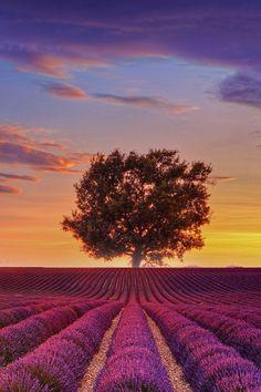 Provence, FranceVitor Santos