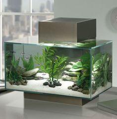 Nano tank Nano aquarium #AquariumAccessoriesDecorations