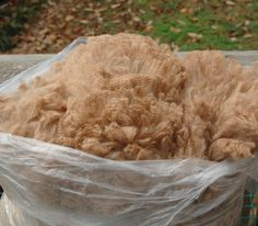 Amazing alpaca fleece!  How to clean.