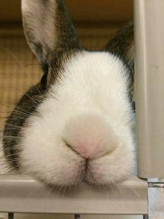 Bendigo at Save a Bunny