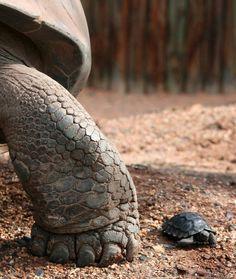 11. Isoa ja pientä. Kuvittele, että olet muuttunut yhtäkkiä joko jättiläiseksi tai pikkuriikkiseksi. Millaista elämä on sen jälkeen? Millaisia haasteita ja seikkailuja kohtaat? Miten palaudut jälleen oikean kokoiseksi vai palaudutko ollenkaan?