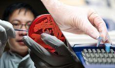 ATUAÇÃO DO BIOMÉDICO - MICROBIOLOGIA | Biomedicina Online