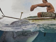 Photographed near Oslob in the Philippines, hand-feeding Whale sharks!