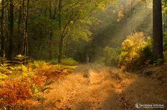 Penoita woods (Portugal)