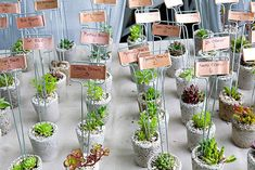 DIY Plant wedding favors as place cards