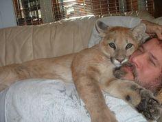 Sweet Cougar cuddlin.