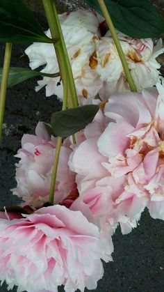 Pink bloom spilling over onto the pavement III. Photo credit: Paola De Giovanni