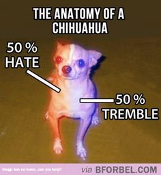 The Anatomy Of A Chihuahua…