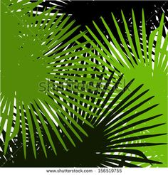 Background with palm tree leaves - stock vector