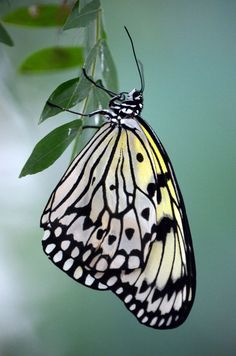 ~~Paper Kite Butterfly by Grace Ray~~