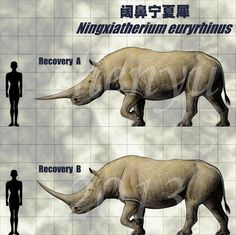 Ningxiatherium euryrhinus by sinammonite on DeviantArt