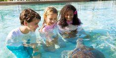 Best Family Vacation Destinations Best Family Vacation Destinations, Vacation Spots, Vacation Trips, Vacation Ideas, Bahamas Resorts, Nurse Shark, Hidden Movie, Small Town America, Vacation Scrapbook