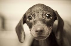 20 Cute Puppy Pictures - Smashing Photoz
