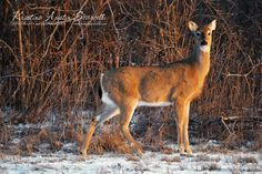 """""""Oh Deer!"""" by Kristina Austin Scarcelli"""