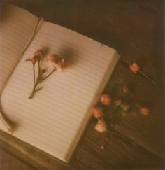 blossoms in a book