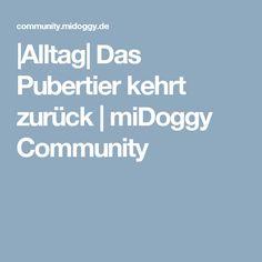  Alltag  Das Pubertier kehrt zurück   miDoggy Community