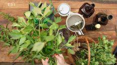 Libečkové maggi — Recepty — Herbář — Česká televize Food 52, Pesto, Spinach, Vegetables, Plants, Vegetable Recipes, Plant, Veggies, Planets