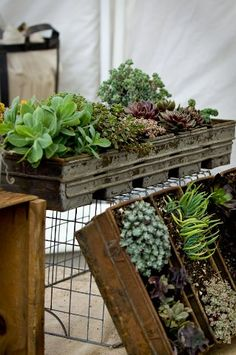 Totally doing a succulent garden this year.