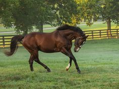 Into Mischief - Thoroughbred Stallion at Spendthrift Farm, KY Barrel Racing Saddles, Barrel Racing Horses, Horse Racing, Thouroughbred Horse, Horse Love, Breyer Horses, Beautiful Horse Pictures, Beautiful Horses, Different Horse Breeds