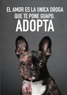 Save Dogs. ADOPT on Behance