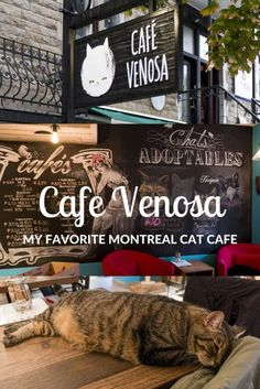 Montreal Cat Cafe - Cafe Venosa, North America's First Vegan Cat Cafe