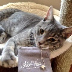 This adorable cat knows how to pick a stylish home-run gift for his #mom - our Little #MLB Toronto #BlueJays necklace! #alexwoo #littleicons #wooplayball #woobluejays #mothersday