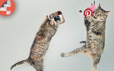Wir sind jetzt auch auf Instagram und Pinterest! #katzenbilderfunktionierenimmer #hypefolgen