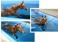 Horse swimming at Arden Equine Pool