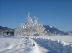 THEMA: Wolfgansee Winterwanderweg REGION: Salzkammergut BUNDESLAND: Salzburg LAND: Österreich ©WTG