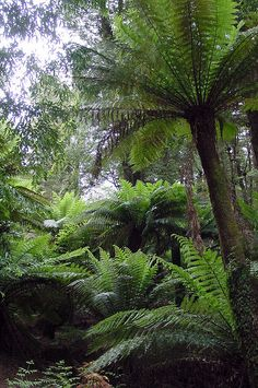 ♥ Rain Forest