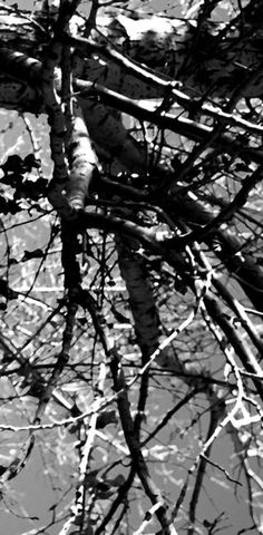 """Out On a Limb   0620 Black and White Edition"" by Barbara Pates, Calgary, Alberta // A digitally enhanced image rendered from an Original Photo by Barbara Pates. // Imagekind.com -- Buy stunning, museum-quality fine art prints, framed prints, and canvas prints directly from independent working artists and photographers."