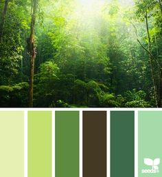 Forests color pallete | shades of Nature  #Style #Nature @Debbie Arruda Arruda Woods.com