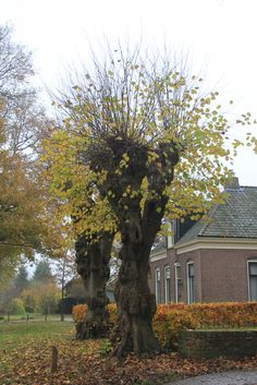 Anloo, Drenthe. The Netherlands