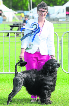 For Your Eyes Only takes breed CC record #dogs #dogshows #breedrecord #PortugueseWaterDogs