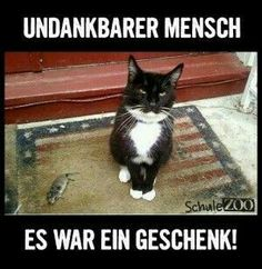 Here at EBENBLATT is the coolest and - Funny animals dog - Katzen - Animals Cute Funny Animals, Funny Animal Pictures, Funny Cats, I Love Cats, Crazy Cats, Cool Cats, Baby Dogs, Pet Dogs, Dog Cat
