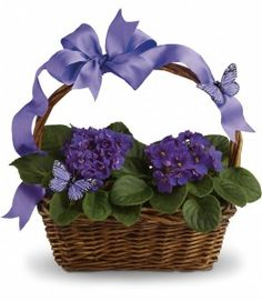 Order flowers online from your florist in St. Swaby Flower Shop, offers fresh flowers and hand delivery right to your door in St. Get Well Flowers, Send Flowers, Big Flowers, Purple Flowers, Violet Plant, Butterfly Plants, Sweet Violets, Mothers Day Flowers, Deco Floral
