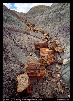 Pictures of Petrified Forest National Park, Colorado Plateau Parks. Part of gallery of color pictures of US National Parks Large Format by professional photographer QT Luong, available as prints or for licensing. Petrified Forest National Park, Colorado Plateau, Into The West, National Parks Usa, Petrified Wood, Fine Art, Monuments, Bryce Canyon, State Parks