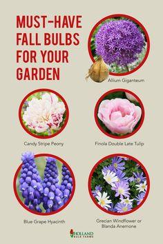 Best Plants For Shade, Shade Plants, Cool Plants, Garden Bulbs, Planting Bulbs, Autumn Garden, Rain Garden, Spring Garden, Spring Blooming Flowers