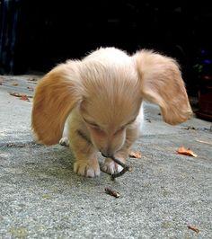 sweet little ears <3