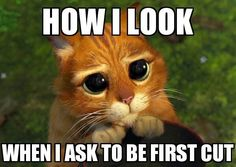 🐣 best memes about shrek cat Shrek Cat, Funny Mom Quotes, Funny Memes, Server Humor, Restaurant Humor, Memes 2012, Server Problems, Vape Memes, Server Life