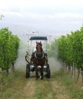 Seresin Kiwi winery trots out one-horse power tractor