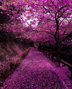 """Behold, my friends, the spring is come; the earth has gladly received the embraces of the sun, and we shall soon see the results of their love! Pink Nature, Japan Photo, Yamaguchi, Spring Is Coming, Lonely Planet, Beautiful Landscapes, All Things, Planets, Country Roads"