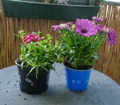 Gemüse & Naschen: Blumenkastenbepflanzung