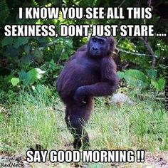 Top 20 Funny Morning Memes - Monkeys Funny - Top 20 Funny Morning Memes Funny Animal Quotes www.c The post Top 20 Funny Morning Memes appeared first on Gag Dad. The post Top 20 Funny Morning Memes appeared first on Gag Dad. Funny Good Morning Memes, Good Morning Funny Pictures, Hilarious Pictures, Funny Ideas, Good Morning For Him, Good Morning Picture, Funny Animal Quotes, Funny Quotes, Funny Memes