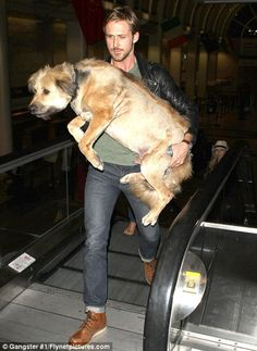 Love this pic of #Ryan Gosling .... His dog must of been frightened of the escalator! So sweet! After all Nice people dating cherish their pets - and each other!  hot