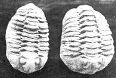 los protozoarias en el periodo cuaternario fueron vitales gracias a que tras el paso de las diferentes extinciones que sucedieron la unica forma de vida capaz de adaptarce a las nevas condiciones ambientales eran estos