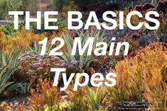 Succulents, Succulent Garden Design, Expert Succulent Advice