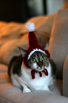 The Santa Cat Hat by scooterKnits on Etsy. , via Etsy. Cute Kittens, Cats And Kittens, Cool Cats, I Love Cats, Costume Chat, Pet Costumes, Christmas Animals, Christmas Cats, Christmas Holidays