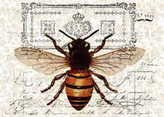 Queen bee antique French vintage Paper illustration collage art print via Etsy. Vintage Bee, French Vintage, Vintage Clocks, Pocket Letter, Bee Tattoo, Bee Art, Paper Illustration, Vintage Illustrations, I Love Bees